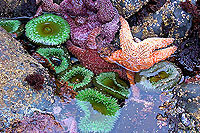 Ocean Life, Ucluelet Bed Breakfast B&B, Ocean Views, Kitchenettes, Beaches, Wild Pacific Trail, Storm Watching, Private, Friendly Hosts, Ocean Mist Guesthouse, Ucluelet, BC