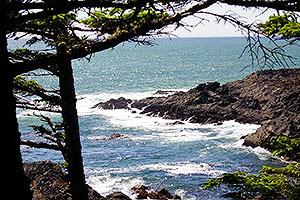 Ocean and Forest, Wild Pacific Trail, Ocean Mist Guesthouse B&B, Ucluelet, BC