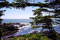 Wild Pacific Trail, Ucluclet, Walk, Forest, Ocean, Lighthouse, Ocesn View, Old Growht Forest, Ucluelet, BC
